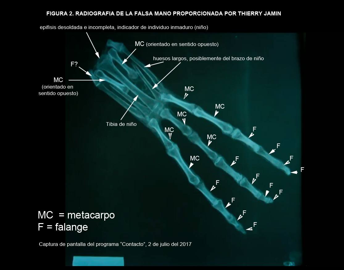 Momias de Nasca parte 3: Armado sin sentido anatómico | Científicos.pe